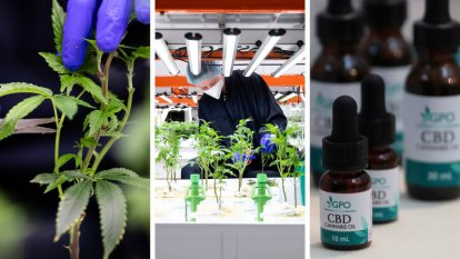 'We know it works': Cannabis oil firms chase approvals as over-the-counter sales are legalised
