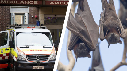 'Triple zero is for people dying': Paramedics swamped by calls about bats and coronavirus