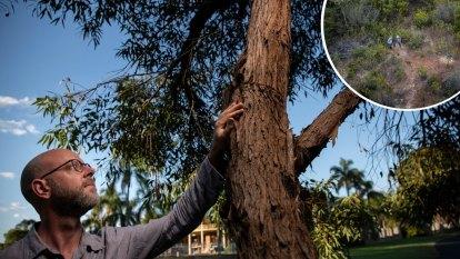 Mission to save Sydney's rarest eucalyptus species from extinction