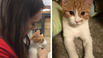 Confession: 'I killed Prime Minister Jacinda Ardern's cat, Paddles'