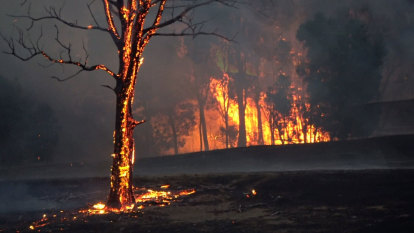 'Big impacts': Almost half of areas in East Gippsland approved for logging burnt