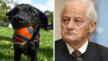 Composite - Hornsby mayor Philip Ruddock has apologised for remarks to a woman in council.Inner West mayor is looking to rescind a motion banning off-leash dog walking in Whites Creek Valley Park bought on by a disabled resident saying his dogs were upset by off leash dogs. Lilyfield, February 19, 2021. Photo: Rhett Wyman/SMH