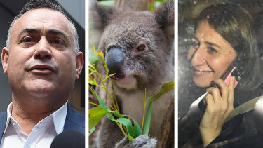 The National's attempts to roll back new koala regulations didn't follow the Sun Tzu rule book.