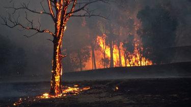 Bushfires in East Gippsland.