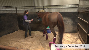 Laura Dixon with Kings Will Dream at the Dowling Equine Centre.