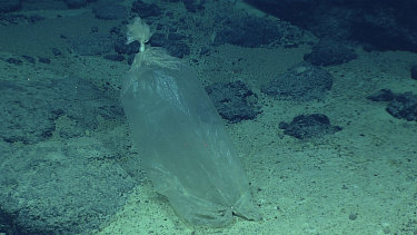 A plastic bag found during a deepwater exploration of the Mariana Trench in the Pacific Ocean.