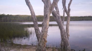 Vegetation ringing Brown Lake.