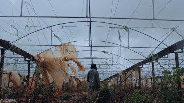 Alison Chhorn's The Plastic House.
