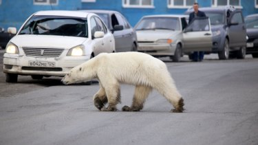The polar bear was filmed by teenagers who said they stoodsome 40 or 50 metres away, and it showed no sign of aggression.
