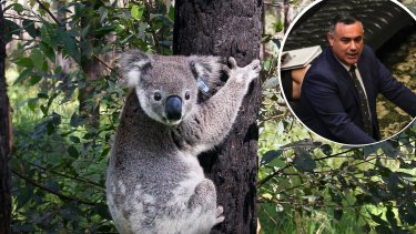 "Nationals leader John Barilaro said his party will be working to bring back a SEPP (State Environmental Planning Policy) to deal with koala habitat. ""To bring back a strategy that deals with doubling its population and protecting its habitat."""