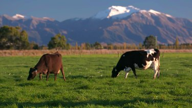 A2 Milk has launched a $251 million bid to buy a majority share of a Kiwi dairy manufacturer.