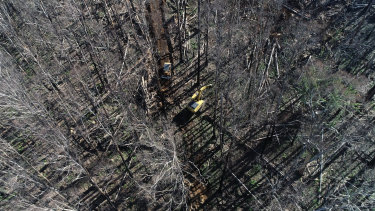 Salvage logging south of Victoria's Alpine National Park.