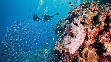 The Great Barrier Reef Foundation says its remit does not include tackling climate change.