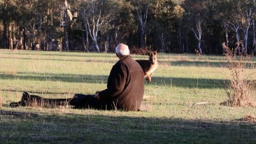 Wildlife carers release the male kangaroo that survived the arrow attack.