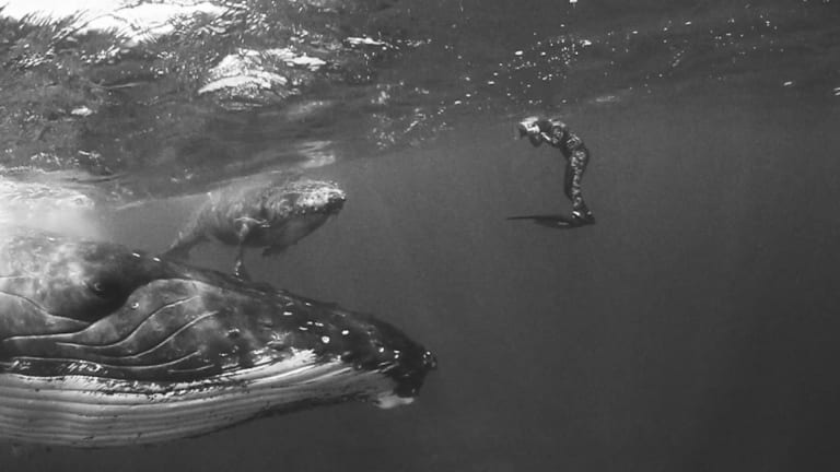 Photographer Jem Cresswell's photos of humpbacks in Tonga are being used to publicise the new Whales Tohora exhibition. He swam with the whales over four years, using only a snorkel.