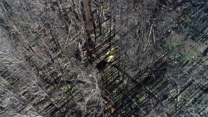 Logging returns to NSW native forests hit by bushfires