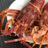 WA rock lobster fisher's $8 million penalty after three-year probe