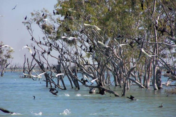 Birds roosting at Lake Gregory after a wet season.