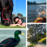 Birds, boats and blooms: Signs of spring spotted on lockdown walks