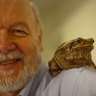 'Sperm wars': Queensland cane toads have much bigger testes than in NSW