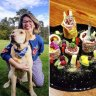 Kibble vs. raw: Pet food has changed, but is there right and wrong?