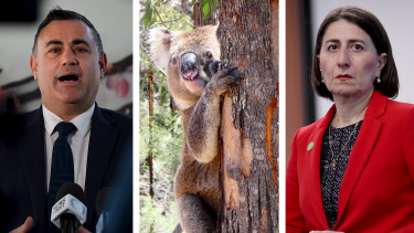 Planning policy related to koalas is threatening to split the government, with Deputy Premier John Barilaro asking Premier Gladys Berejiklian to call an emergency cabinet meeting.