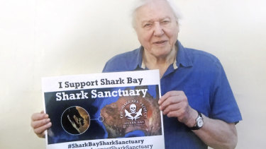 Sir David Attenborough has thrown his weight behind protecting sharks in Shark Bay's marine park.