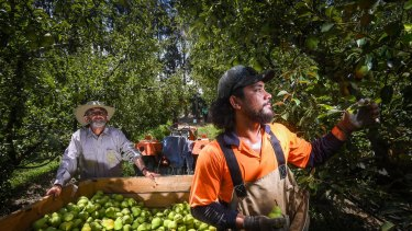 Industries that rely on moving fruit pickers from state to state are concerned about getting borders open.