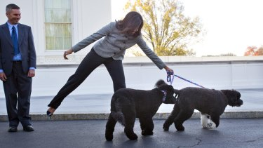 Even Michelle Obama knows who rules the roost (being pulled along by dogs Bo and Sunny).