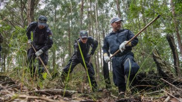 Police commenced a large-scale forensic search in bushlands today as part of the ongoing investigation into the 2014 disappearance of William Tyrrell.