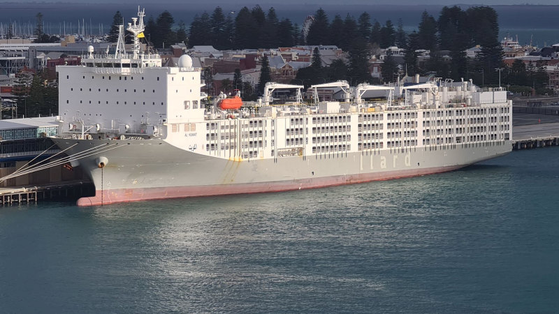 COVID-19 live export ship banned from sailing in the northern summer
