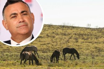 """NSW Deputy Premier John Barilaro says federal Environment Minister Sussan Ley has been misled by """"ideological anti-brumby groups""""."""