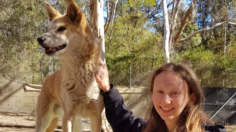 Chloe Gardner with dingoes at the Bargo Dingo Sanctuary.