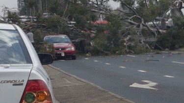 A tree has fallen onto the Hume Highway at Warwick Farm, crushing cars underneath it.