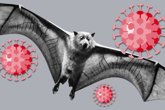 Bats in Australia don't carry the coronavirus.