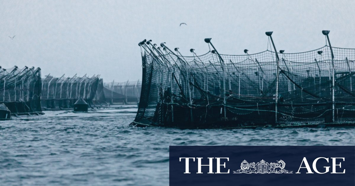 How Tasmania's salmon farms are being cleaned up by author Richard Flanagan