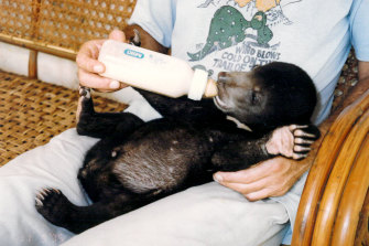 Mr Hobbs soon after he was rescued as a cub in Phnom Penh.