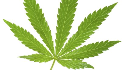 Melbourne gets its first cannabis dispensary - and it may be the first of many