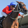 Famous five return to Rosehill looking for repeat performance