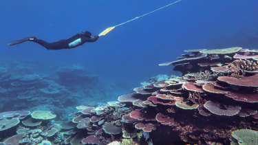 Australian Institute of Marine Science surveying the Great Barrier Reef to monitor coral recovery after mass bleaching events.