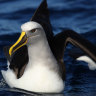 Twitchers have a treasure trove of data to aid seabirds as numbers drop