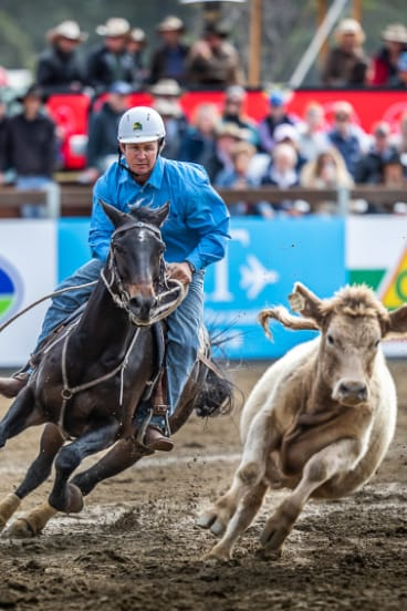 Ben Hall competes on Footacre at the World Championship Gold Buckle Campdraft.