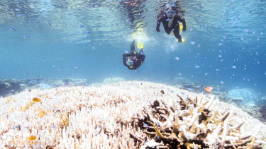 """""""As I wrote my book ... the Great Barrier Reef experienced back-to-back bleaching for the first time in its history."""""""