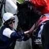 Racing Victoria to probe link between internationals and Cup deaths