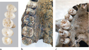 The teeth and partial jaw fragments of Homo luzonensis dated to at least 50,000 years old.