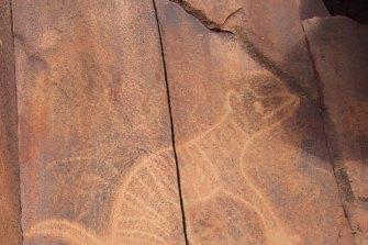 Rock carvings on the Burrup Peninsula, near Karratha, Western Australia, includes this image of the extinct thylacine, or Tasmanian tiger.