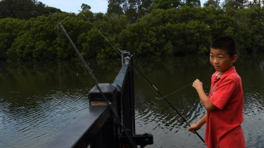 Andrew Li aged 10, puts bait on one of his rods while fishing on the Cooks River at Boat Harbour in Hurlstone Park.