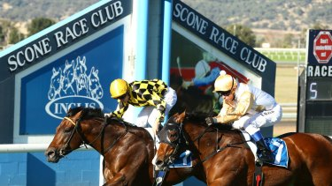 It's a bumper 8-race card at Scone on Friday