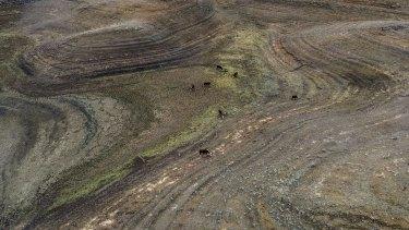 Bone-dry: Drought-ravaged farming land in NSW.