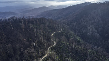 The Victorian government has renewed plans for logging in native forests, prompting criticism from conservation groups who say greater protections are needed due to the impact of last summer's bushfires, pictured here.